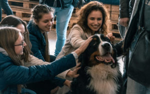 What are the psychological benefits our pets bring?